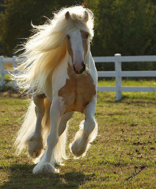 les-chevaux-du-12