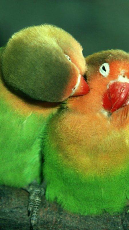 a neck kiss 8-p