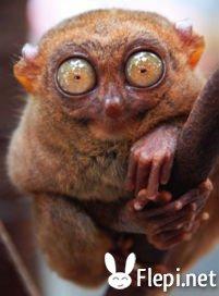 Les animaux les plus étrange au monde