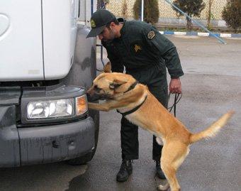 """Les milles métiers du chien """"Super détectives"""""""