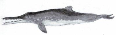 Le dauphin >> Ancêtres