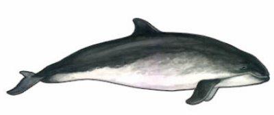 Le dauphin >> La famille