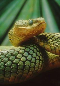 Les 8 animaux les plus dangereux du monde