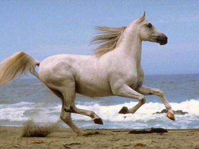 Comprendre son cheval :)