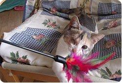 Maltraitance - Un chaton martyrisé