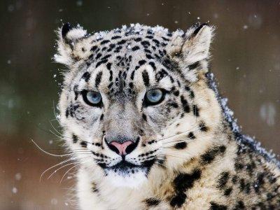 Animal du mois de Novembre:
