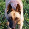 13 mois de prison ferme pour avoir achevé son chien