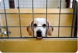 """Expérimentation - 6 beagles tués """"pour la science"""""""