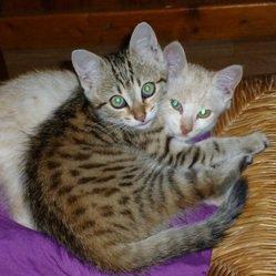 Un chien sauve 2 chatons