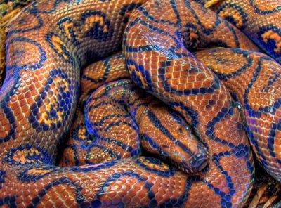 Animal du mois de février: Les serpents