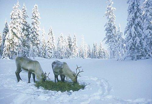 Animal du mois de Decembre