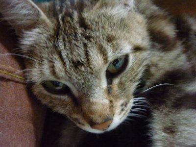 mes chats je les kiff ♥ grave =) Voici Happy que j'ai perdu, ma preferé. Je ne t'oublirai pa  =,(