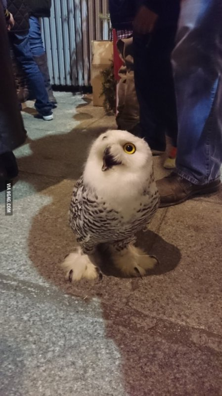 Owl was trying to get into a bar.