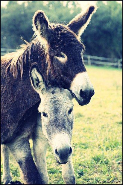 N° 21 - Il n'y a pas que les chevaux qui sont trop mignons