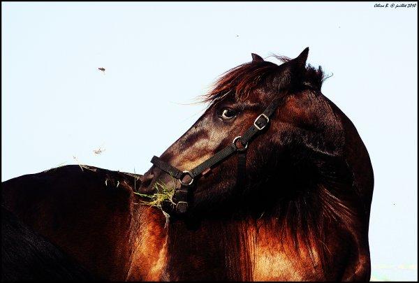 N° 22 - Mon joli petit poney