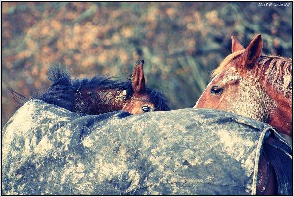 """N° 24 - """"Avoir du respect pour son cheval, c'est trouver un équilibre dans son éducation et sa vie sociale."""""""