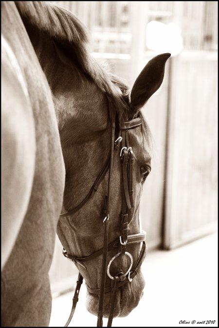 """N° 33 - """"Ce qu'on appelle l'instinct n'est-il pas aussi une forme d'intelligence, de comparaison de situations, de souvenirs qui peuvent  l'amener à une forme de jugement propre à ses capacités de raisonnements en tant que cheval ?"""""""