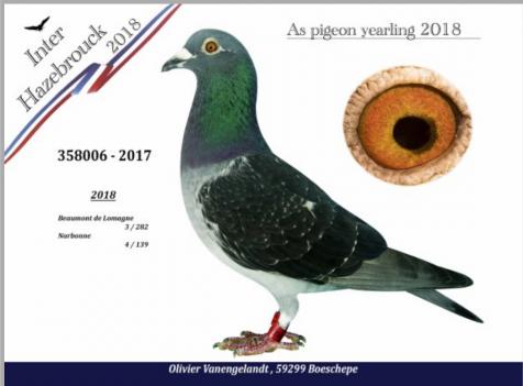 St Vincent  lâcher  7H15 ,dépouillement 17H00  ,331 pigeons pigeons dont 37 femelles pour 56 amateurs.