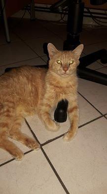 mon chat Ladd un bon pepere