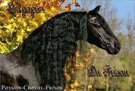 Les chevaux frisons noires