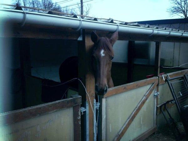 Moi je suis super passionner  par les chevaux