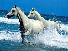 Voilà une photo des chevaux