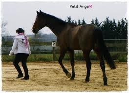 Le cavalier et sont cheval
