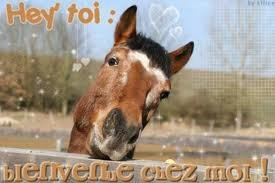 Photo chevaux pie overo