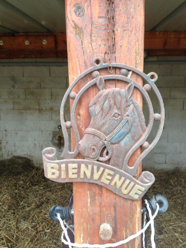 Se ferre vous souhaite la bienvenus dans un temps se lui des chevaux