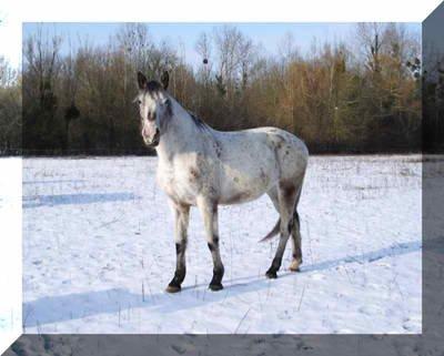 Voici les quatre chevaux que j'ai montée