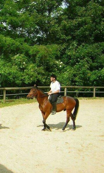 Voici un cheval que j'ai montée dans le club ou j'était