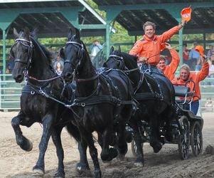 Les chevaux de trait  cob normand trait anhélait