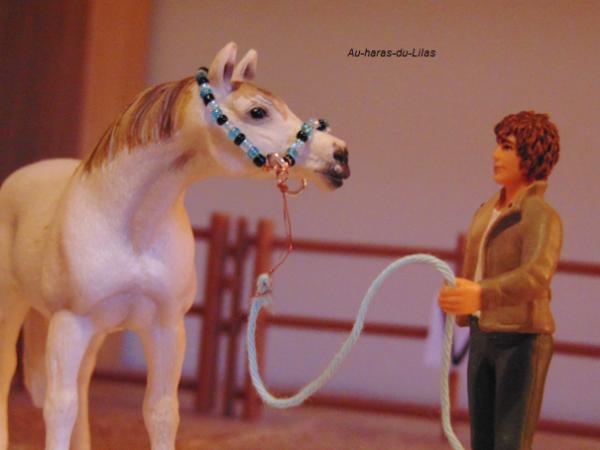 Licol en perles pour chevaux arabes ♥
