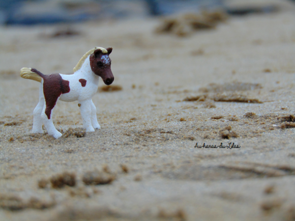 Shooting à la plage : partie 2
