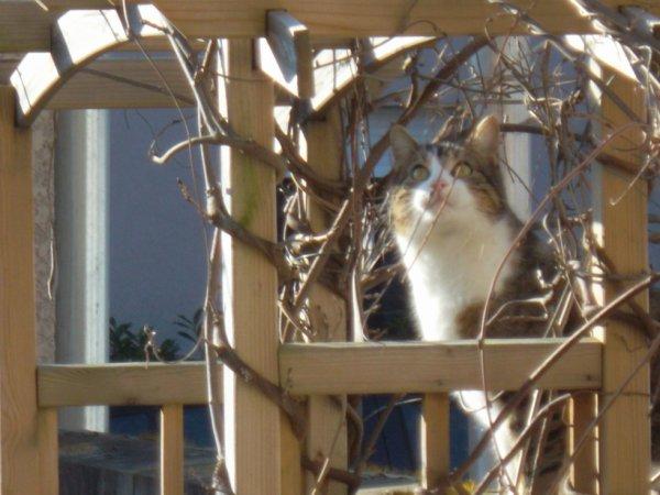 à l'instant la visite du chat de ma voisine   !!!