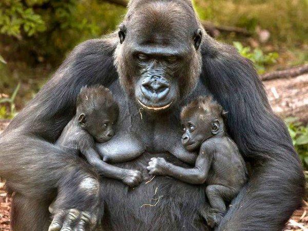 bonne fete à toutes les mamans   !!!
