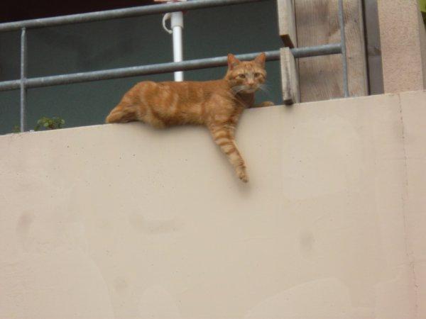 je me repose tout comme ce chat pour reprendre des forces  bisous à tous et à toutes    bonne semaine !!!