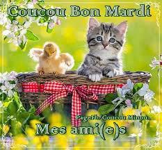 bon mardi avec des couleurs de printemps   !!!