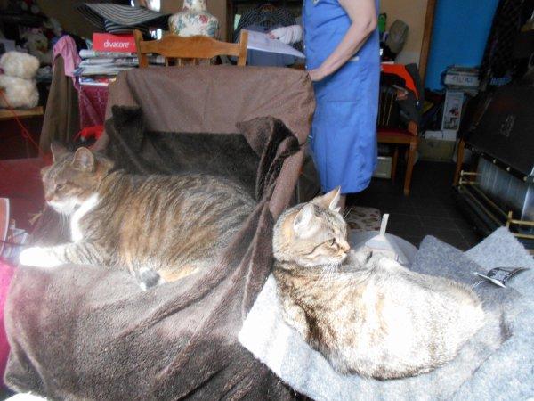 lundi je serai chez le vetinaire avec un de mais chat