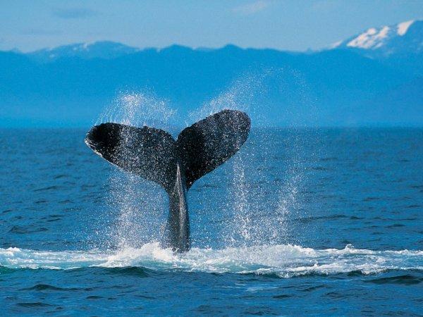 Les Baleine