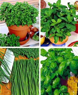 Epices, herbes, plantes aromatiques...
