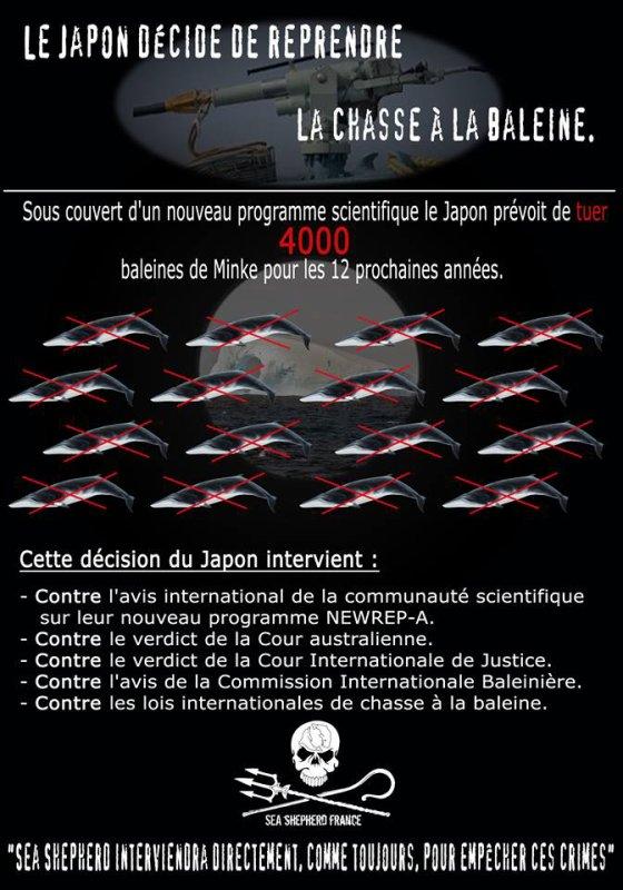 Le Japon Décide De Reprendre La Chasse A La Baleine. :(