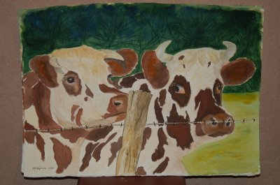 portraits de vaches normandes