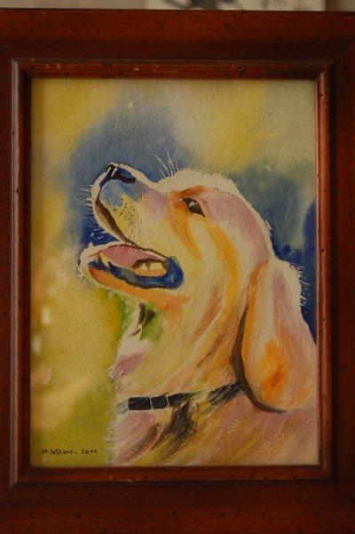 chien golden retreiver