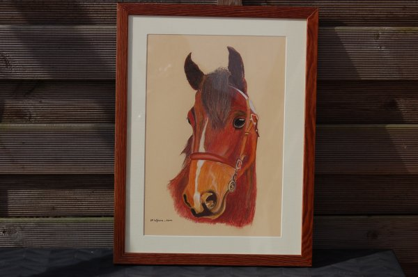 portrait de cheval 1