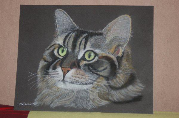 portrait chat 40*50 au pastel