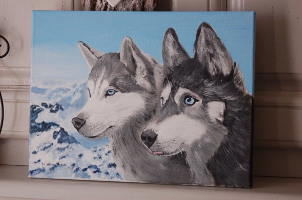 chiens Husky