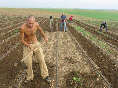 Andalousie : des centaines d'ouvriers se réapproprient des terres livrées à la spéculation