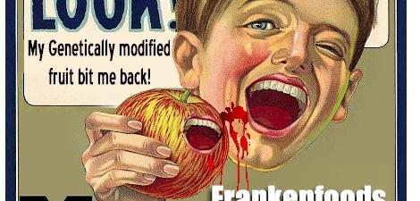 Dur riz OGM avec des gènes de foie humain