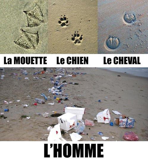 IMAGE DE LA NUIT !